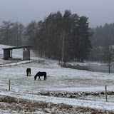 01. Januar 2016: Neujahrswanderung ins Waldnaabtal - IMG_1579.JPG