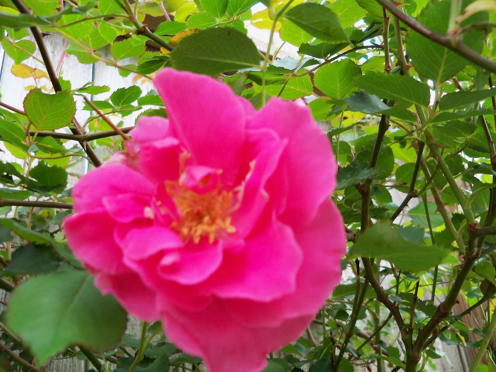 Gardening 2011 - 100_6970.JPG