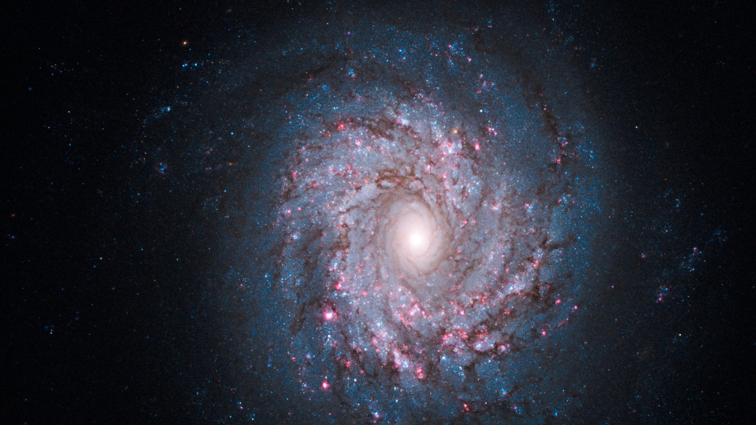 NGC 3982 | astronomolly