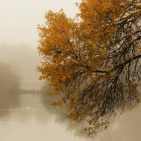 otoño by Miguel Lopez De Haro - Nature Up Close Trees & Bushes (  )