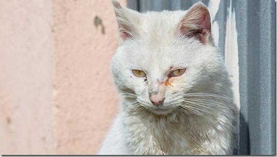 gatto-anziano-occhi
