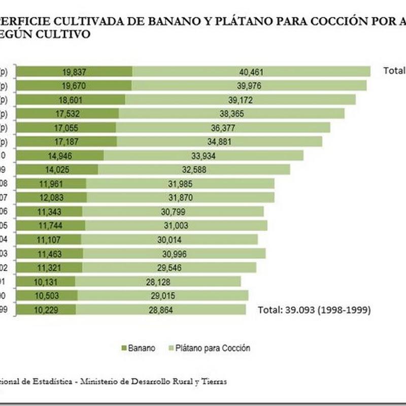Producción y exportación de plátanos se incrementa sustancialmente en los últimos años