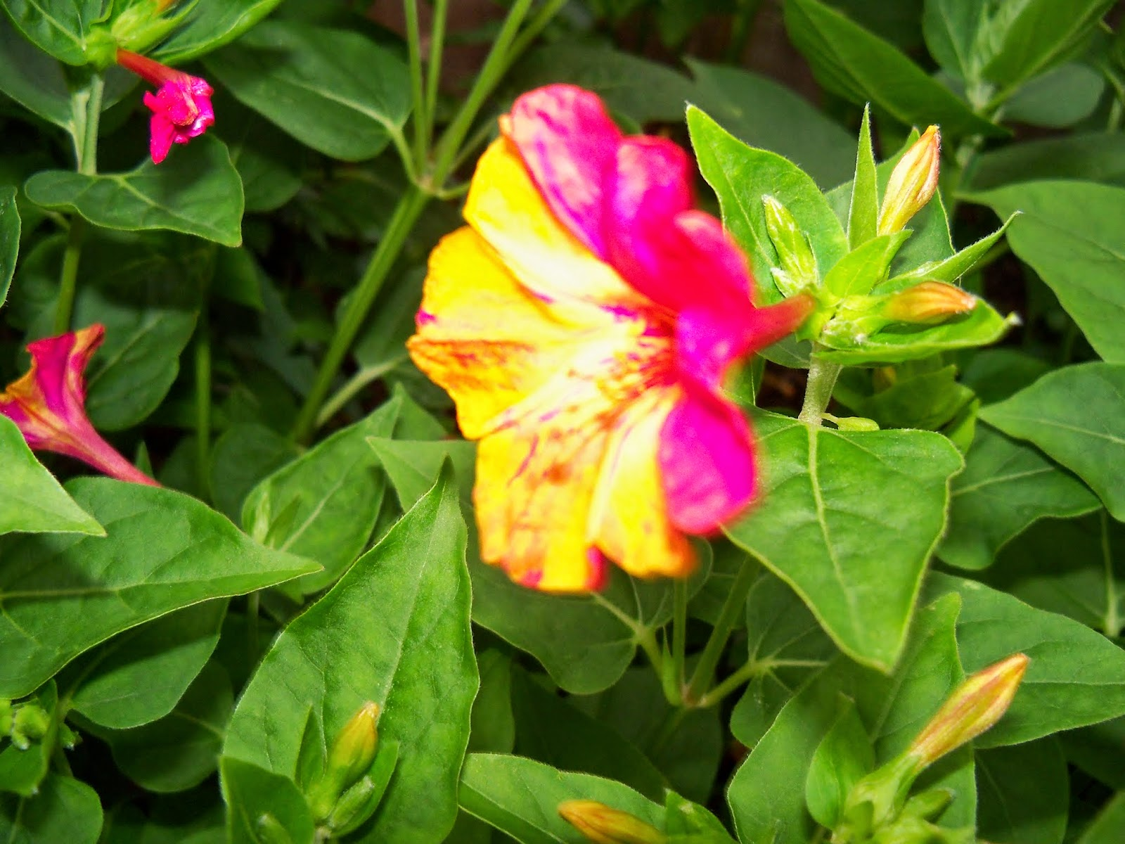 Gardening 2014 - 116_1958.JPG