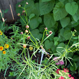 Gardening 2010, Part Two - 101_3341.JPG