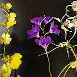 orquidea - DSC02086.JPG
