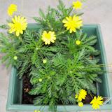 Gardening 2010 - 101_1133.JPG