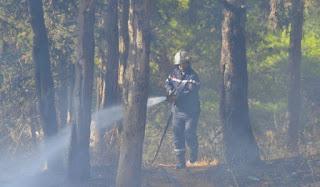 Forêts: plus de 11.000 ha parcourus par les feux depuis juin
