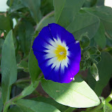 Gardening 2012 - 115_1524.JPG