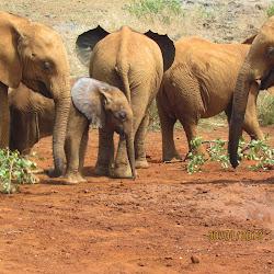 Sheldrick Elephant Orphanage's profile photo