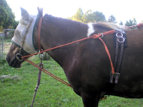 Stuffy wearing balancing side reins - 2009
