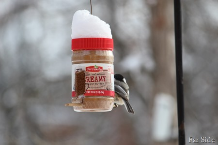 Peanut Butter Feeder