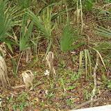 Beidler Forest 004.jpg
