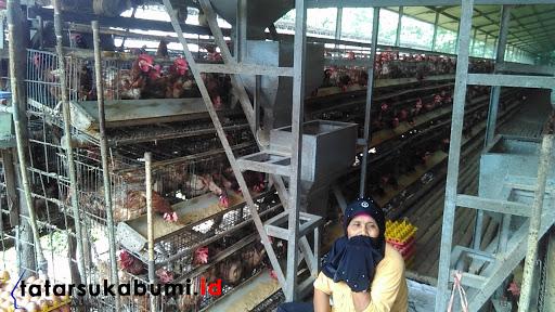 Peternakan Ayam di Cikembar Sukabumi Kembali Diberi Peringatan