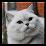 Groove Cat's profile photo