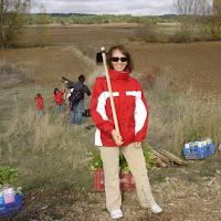 Plantación en Hontoria de Valdearados - Burgos  (2008)