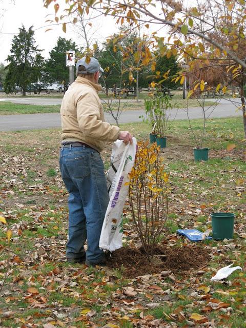 Hammo Planting - Shannon Schiesser - IMG_4897.JPG