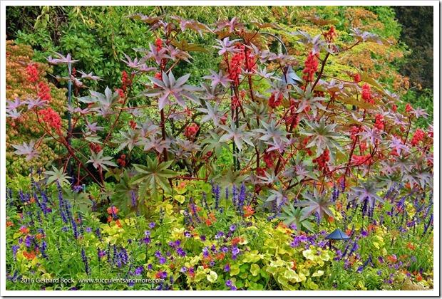 160906_Butchart_Gardens_0106
