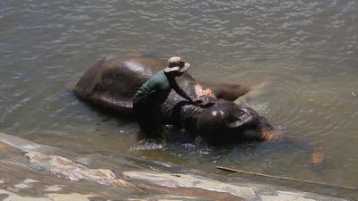 Elephant Bath 2