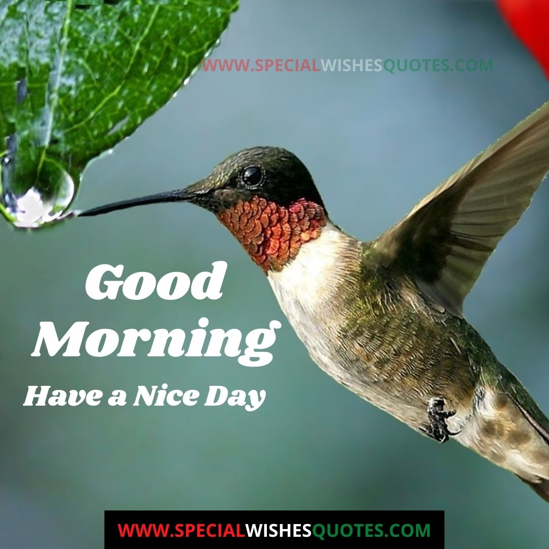 good morning nice day images