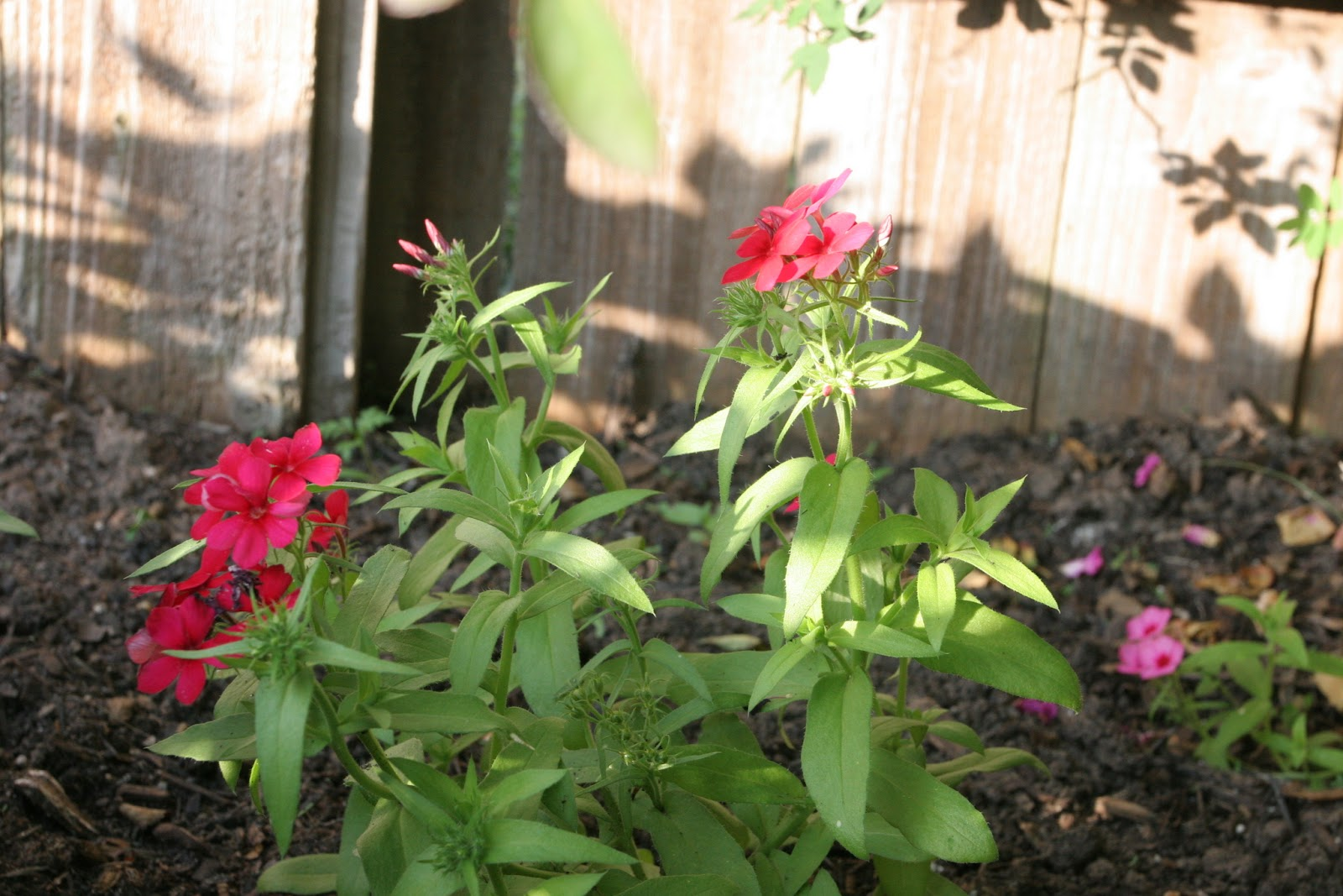 Gardening 2012 - IMG_2867.JPG