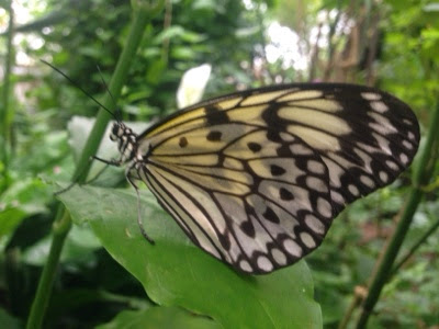 A butterfly at Butterfly world, Preston Park, Stockton on Tees