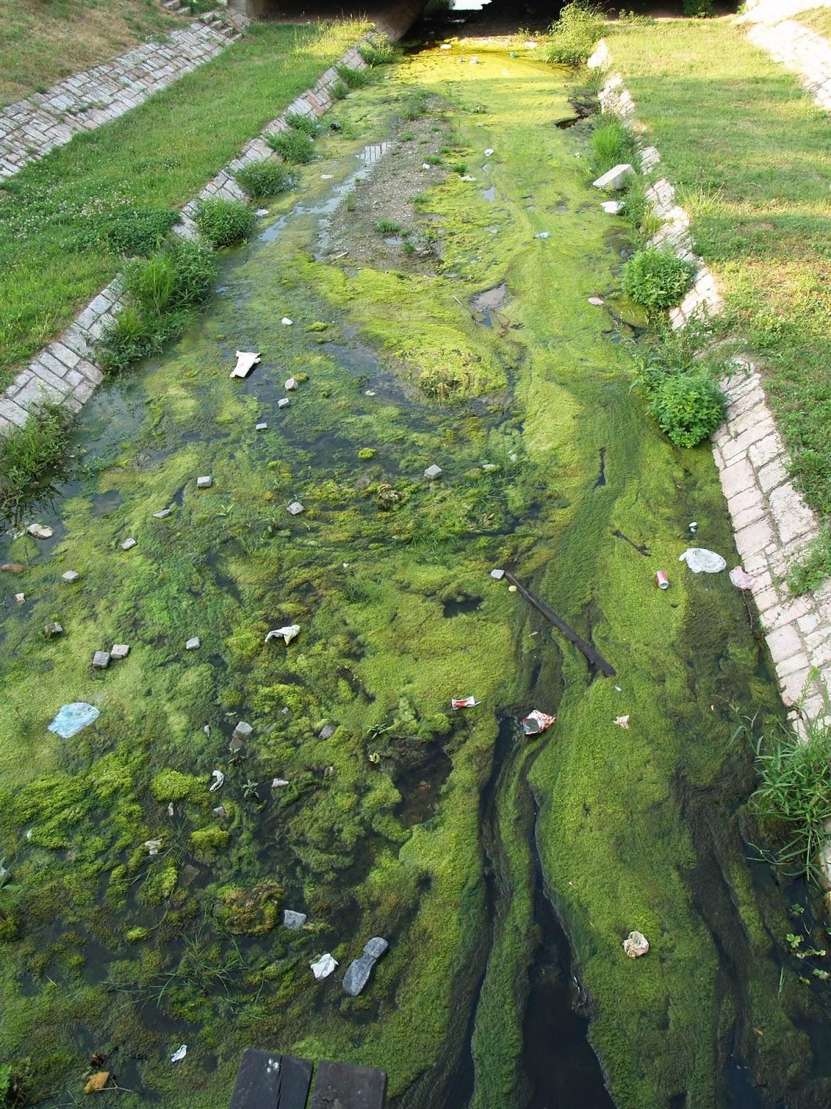 Smotra, Smotra 2006 - P0282450.JPG