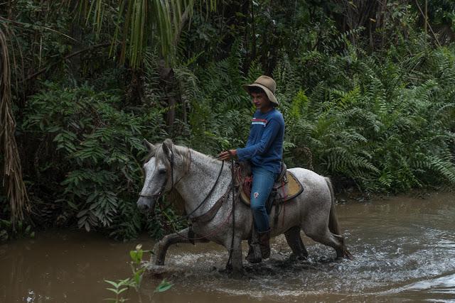 Fundo Palmarito, 265 m (Yopal, Casanare, Colombie), 22 novembre 2015. Photo : C. Basset