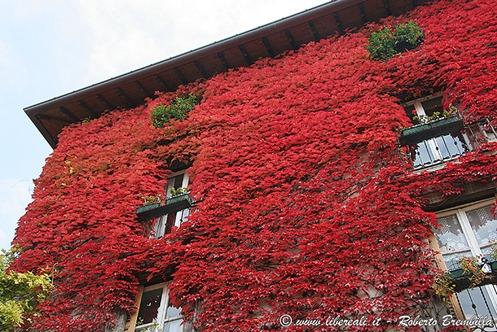 2_Varenna-colori-autunno_014