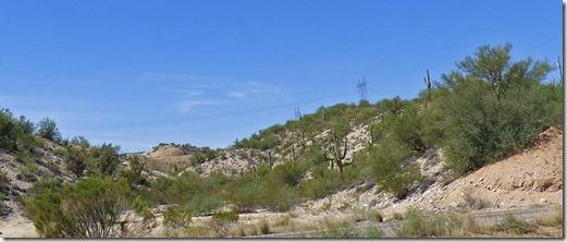 Saguaro Cactus along US 93