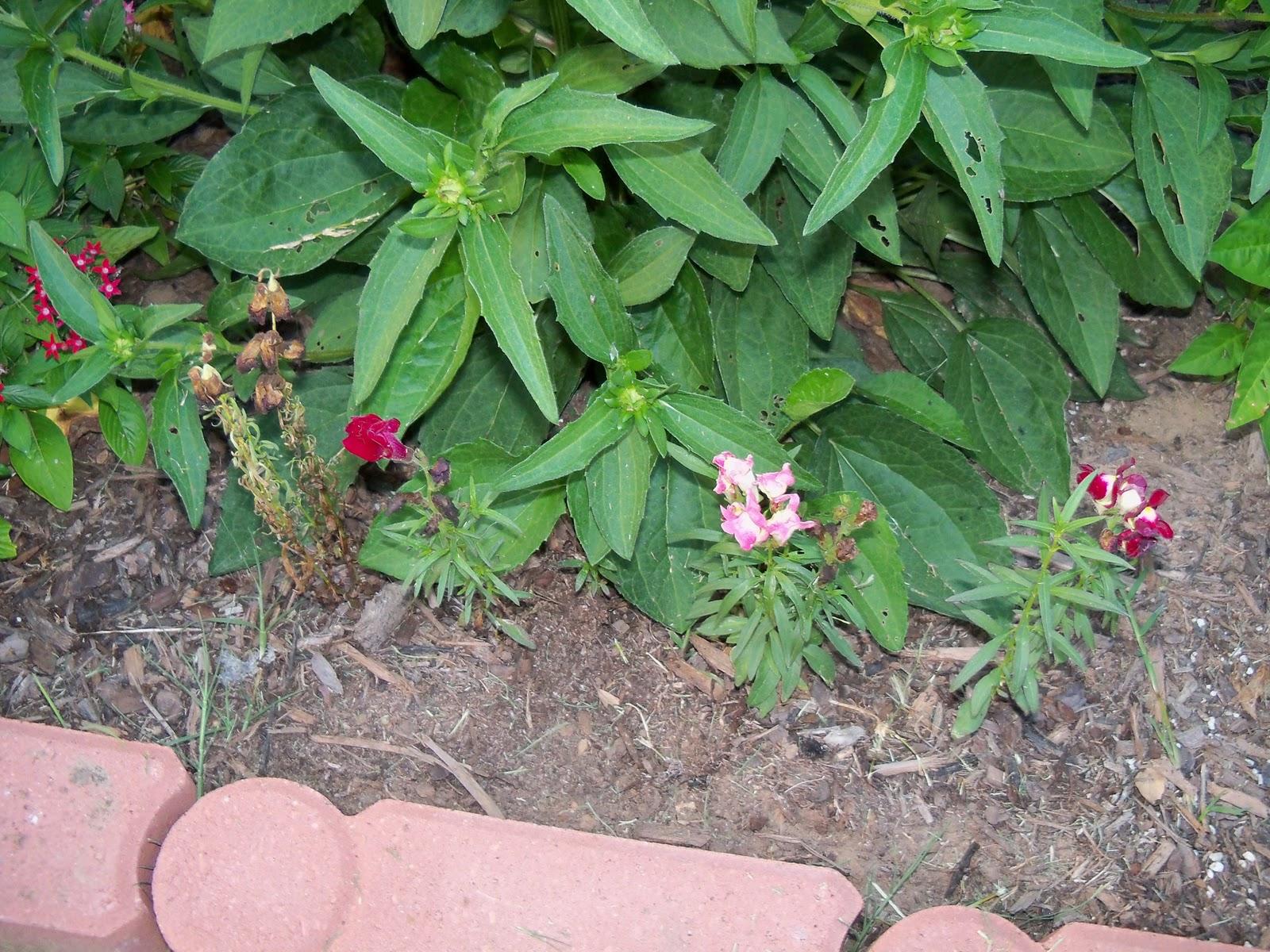 Gardening 2010, Part Three - 101_4319.JPG
