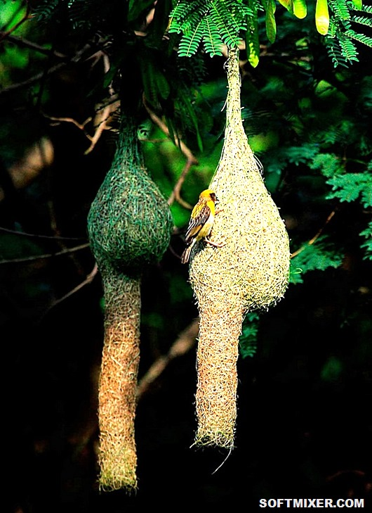 14899010-R3L8T8D-900-animal-architecture-nests-8-2
