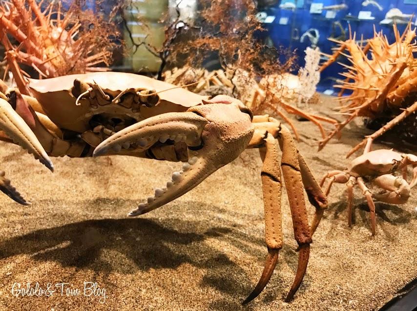 Fauna marina en el museo marítimo de Asturias