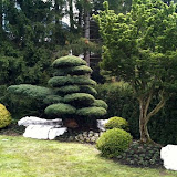 Garten in Gstaad mit Gartenbonsai Kiefer und Ahorn