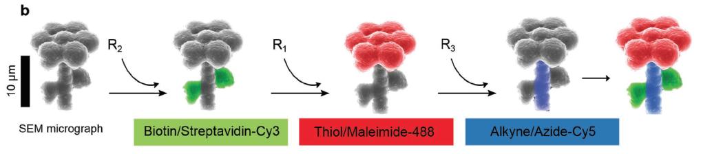 Чтобы еще больше доказать преимущества этого метода, используя 3D-дизайн и другие материалы, исследователи Max Planck также демонстрируют способность создавать нескопический цветок, сделанный из комбинации витаминов.