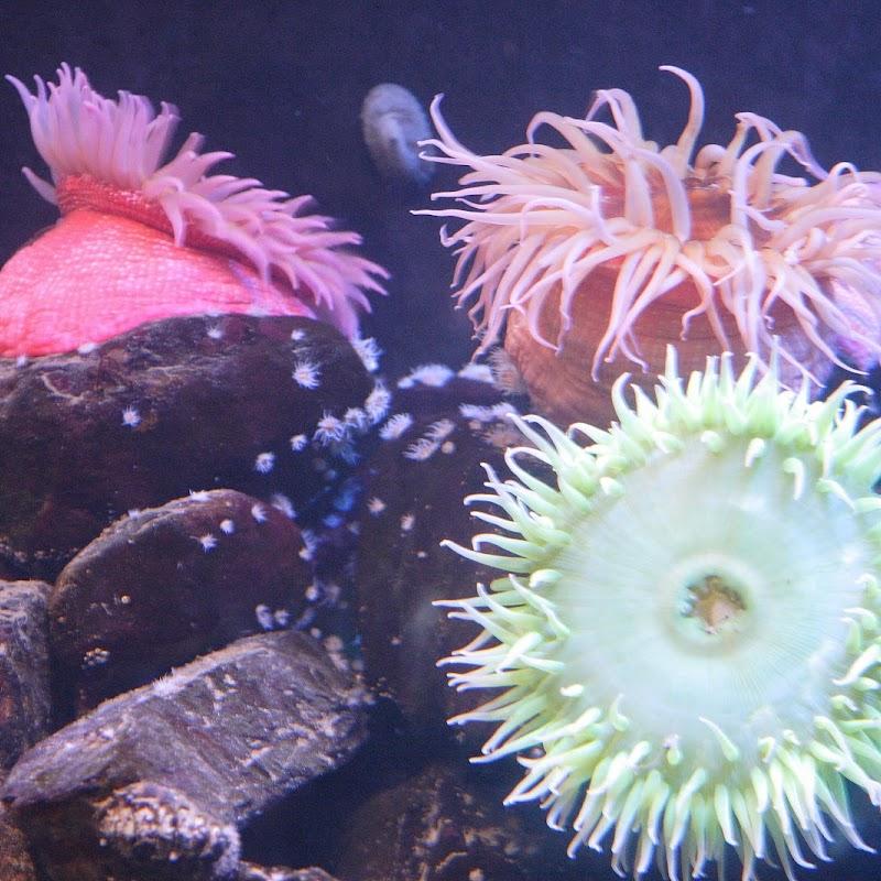 Aquarium_03.JPG