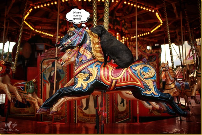Matt on Carousel Memorial Day (©Bell Fur Zoo)