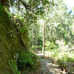 Mossy rock walk west of Phil Houghton Bridge (374257)