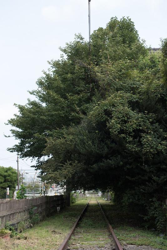 170827 線路を覆う樹木