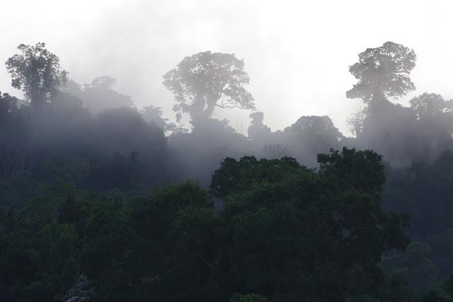 Brume matinale. Carbets de Coralie (Crique Yaoni), 30 octobre 2012. Photo : J.-M. Gayman