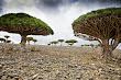 Isla-de-Socotra-Yemen_01