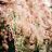 Leanna Moss avatar image