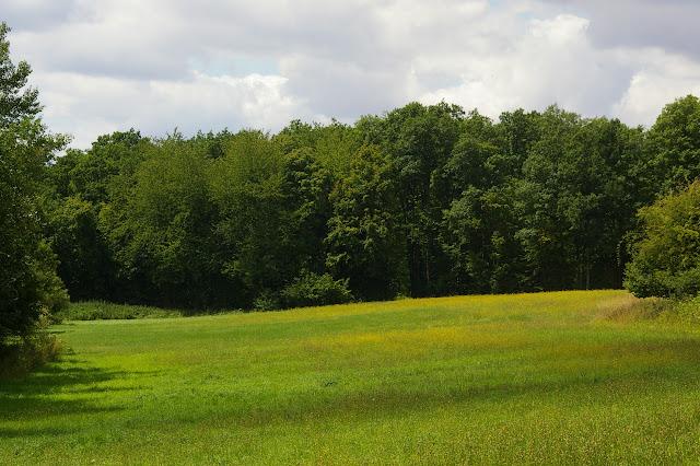 Les Hautes-Lisières (Rouvres, 28), 30 juin 2011. Photo : J.-M. Gayman