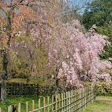 2014 Japan - Dag 10 - jordi-DSC_0858.JPG