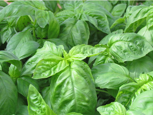12 tipos de plantas para encher sua casa de energia positiva
