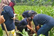 Berkat Pelatihan SDM Penyuluh dan Petani Jagung Kab. Luwu Raih Peningkatan Produksi