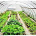 الزراعة تمنح تراخيص ل19200 صوبة زراعية