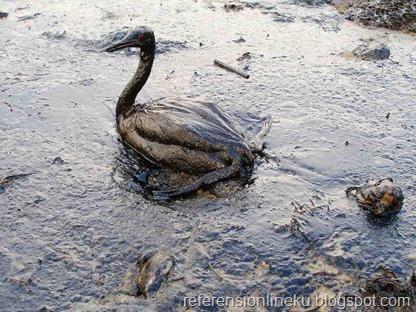 Burung terkena dampak tumpahan minyak bumi