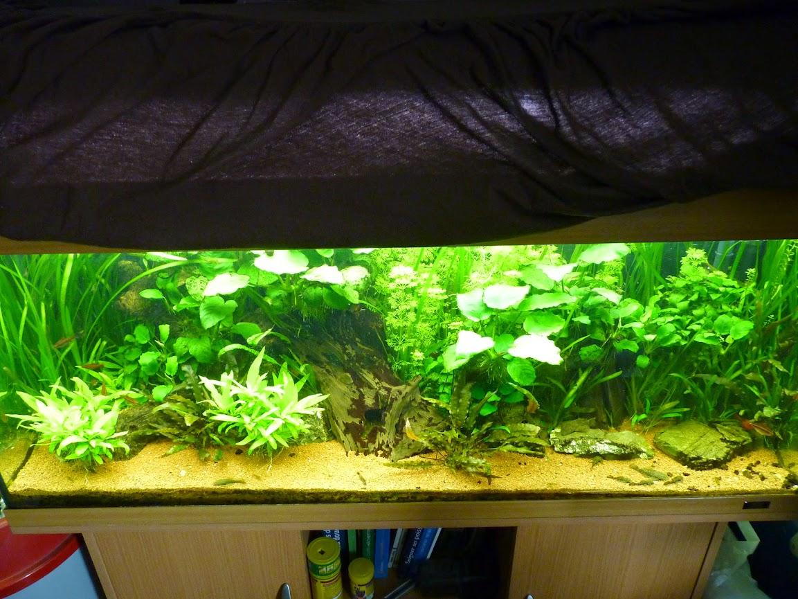 Ma petit histoire Aquariophile de 2009 à aujourd'hui  P1060198