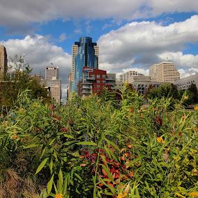 Beyond the Flower Garden by Karen Harris - City,  Street & Park  City Parks ( clouds, skyline, buildings, cincinnati, cityscape, flowers )