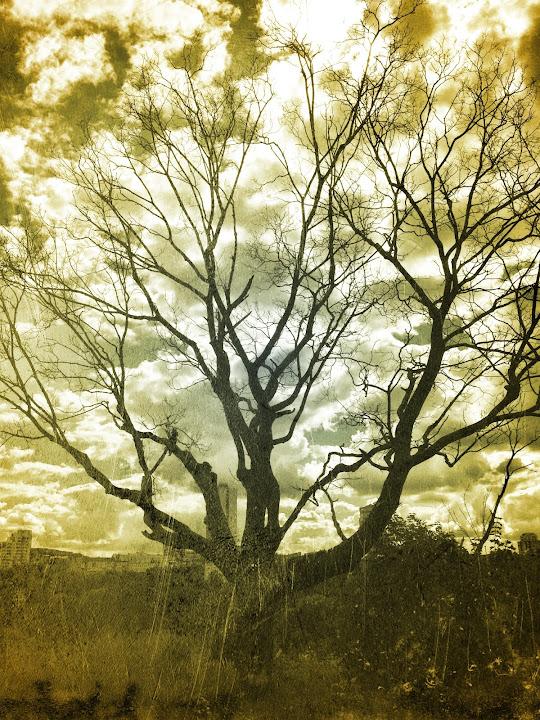 Фотография дерева снятого на телефон